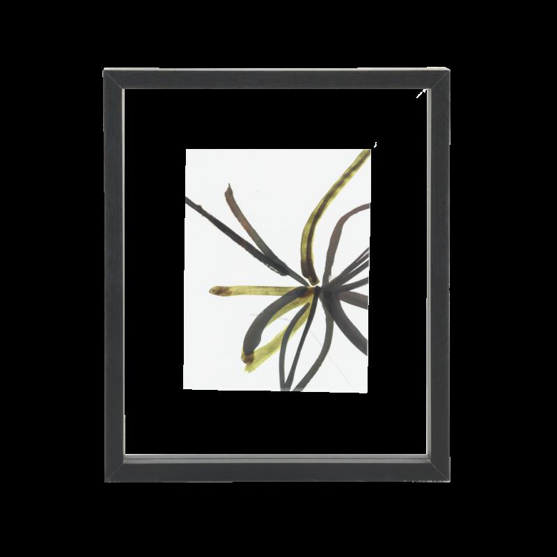 Frame Minimalism M.