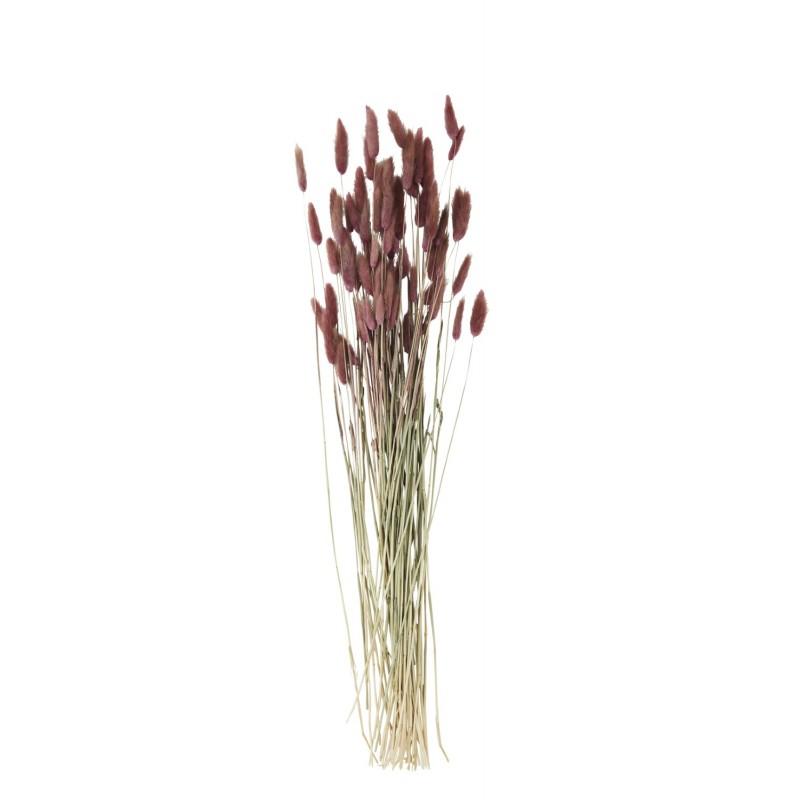 Λουλούδια αποξηραμένα